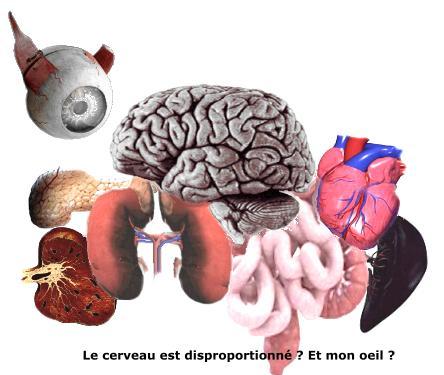Pierre C.J. Vaissiere expose ses organes